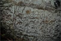 고령 봉평리 암각화…검파(劍把)보다 석인(石刃) 부분 강조