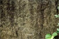 나주 운곡동 암각화…선각(線刻) 형태의 암각화로 주목