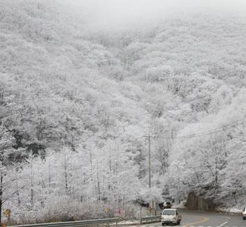 눈이 내린다. 기상청 오늘 전국날씨 일기예보 /사진=뉴시스