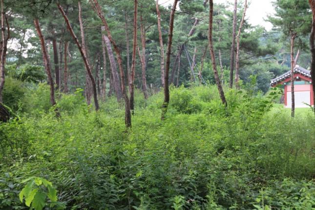 ②번 백호지역에 우거진 숲