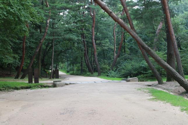 건원릉 입구의 울창한 송림. 외청룡, 외백호가 관쇄하지 못하나 숲이 바람막이 기능을 한다.