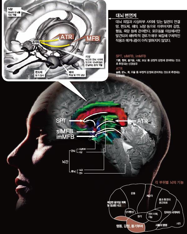 대뇌 변연계