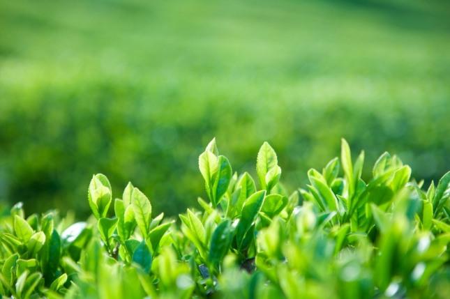 봄의 갑목(甲木)은 추운 겨울을 견뎌낸 앙상한 가지에서 새싹이 돋아나는 시기다. 적당한 비와 햇살, 토양의 연(緣)을 만나면 꽃을 피우고 잎이 무성해진다. 자료=글로벌이코노믹