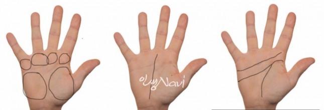 돈을 잘 버는 사람의 손을 살펴보면 손바닥이 넓고 손가락이 밑둥과 끝이 거의 같으며 악수를 하면 매우 튼실하고 안정적인 느낌을 준다.