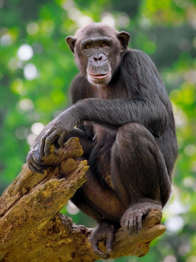 원숭이가 큰 나무를 타고 올라가는 꿈은 지금까지 마음먹었던 일들이 순리적으로 풀리며 입학, 승진, 당선, 합격, 성공 등의 길몽이다. 자료=글로벌이코노믹