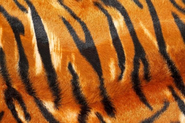 호랑이의 가죽을 얻는 꿈은 투자자나 후원자를 만나 일이 술술 풀리는 만사형통의 꿈이다. 자료=글로벌이코노믹
