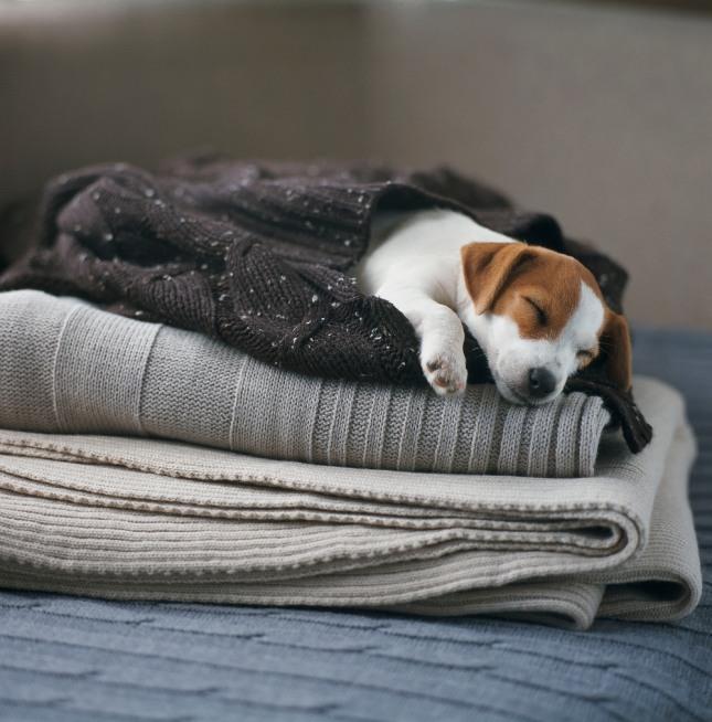 자신의 집 개가 남의 집 개들과 노는 꿈은 집 식구의 누가 단체에 가입하거나 무뢰한들과 공모할 일이 생긴다. 자료=글로벌이코노믹