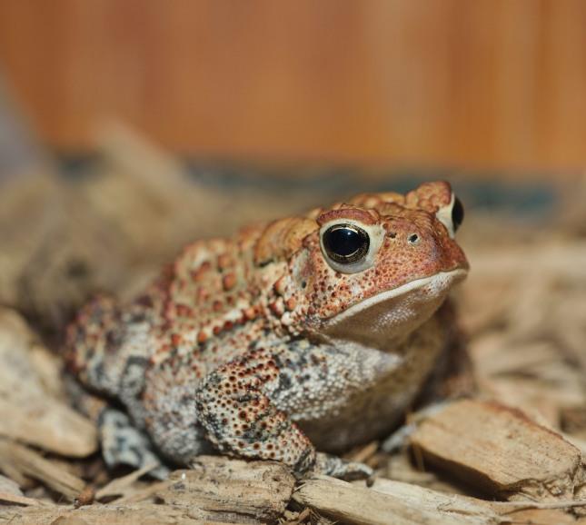 금두꺼비나 금송아지를 얻은 꿈은 태몽일 경우 부귀 공명할 자손을 얻게 된다. 자료=글로벌이코노믹