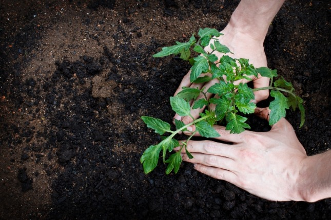 씨앗을 심고 외부환경인 토양, 자양분, 비료나 온도, 수분, 햇빛, 노동력 등을 적절한 시기(Timing)에 투입해야 열매를 맺듯이 인생도 마찬가지다. 사진=글로벌이코노믹