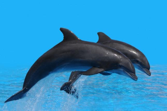 꿈속에서 흰 고래를 보는 것은 훌륭한 인물의 탄생을 암시하는 길몽이다. 자료=글로벌이코노믹