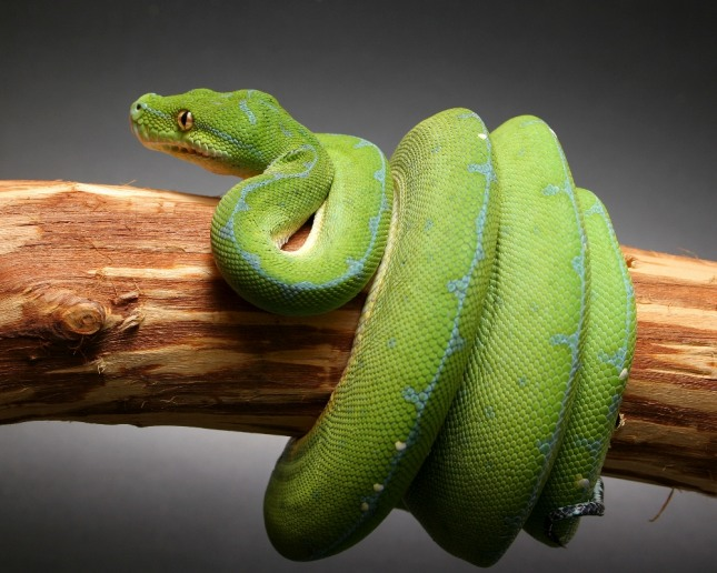 뱀 비늘 속에서 용이 나오는 꿈은 둔갑술로 사업을 변신하여 경영난을 극복하게 된다. 자료=글로벌이코노믹