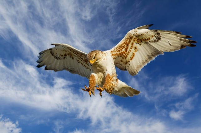 독수리를 타고 하늘을 훨훨 날아다니는 꿈은 지금보다 높은 지위나 명예를 얻게 될 것임을 암시하는 길몽이다. 자료=글로벌이코노믹