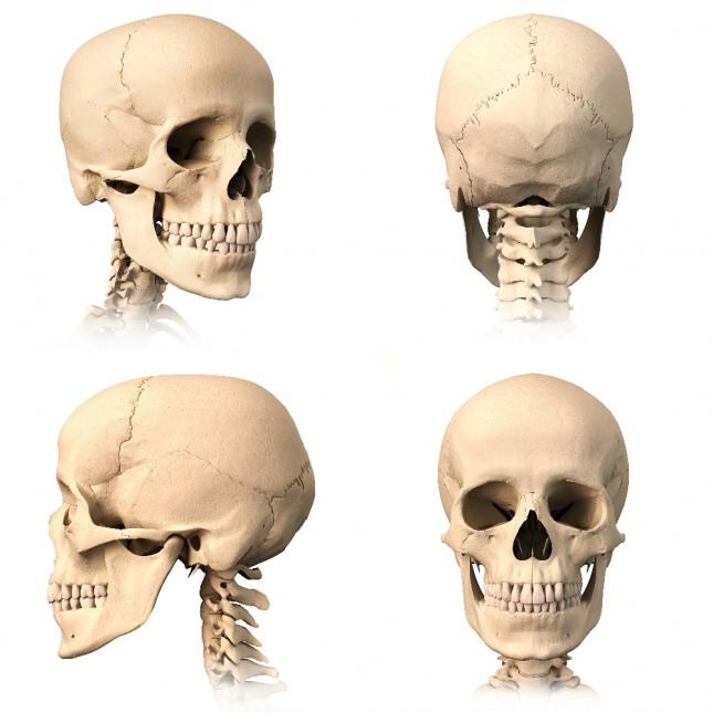 상대방 얼굴이 해골로 변해 덤비는 꿈은 질병, 사고, 위험을 암시한다. 자료=글로벌이코노믹