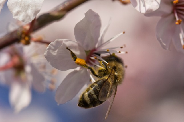 꿈속에서 벌집을 발견하거나 벌집을 집으로 들고 온다면 재물운이 들어옴을 상징한다. 자료=글로벌이코노믹