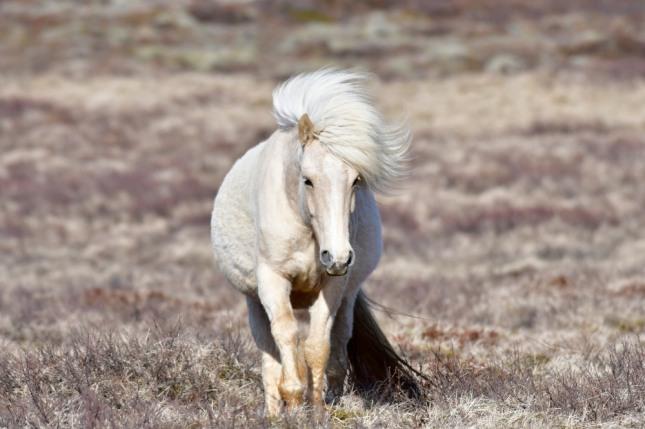 말을 타고 눈 위를 달리는 꿈은 창조, 연구, 발명, 아이디어, 두뇌계발 등의 길운을 암시한다. 자료=글로벌이코노믹