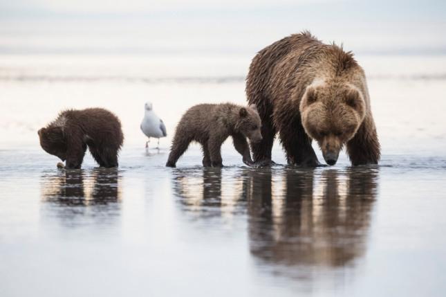 불 난 집에서 애기곰을 구해내는 꿈은 태몽을 암시한다. 자료=글로벌이코노믹