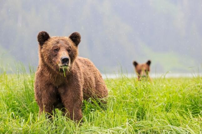곰이 함정에 빠져 허우적대고 있는 모습을 보았다면 사건이나 사고가 발생할 수 있음을 암시한다. 자료=글로벌이코노믹