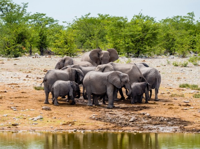 코끼리를 타고 평탄한 길을 따라 가고 있다면 행복한 인생이 펼쳐질 것을 암시한다. 자료=글로벌이코노믹