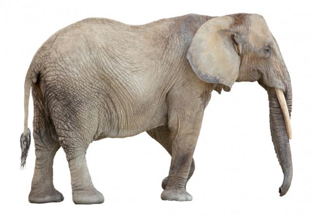 코끼리가 자신의 집 마당에서 쓰러지는 꿈을 꾸었다면 가족이나 친척 또는 친구에게 사건이나 사고가 발생할 수 있음을 암시하는 길몽이다. 자ㄹ글로벌이코노믹