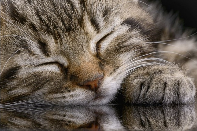 고양이가 쥐를 붙잡는 꿈은 재물과 이권이 생기는 등 집안 살림과 일신상의 이로움이 늘어나게 된다. 자료=글로벌이코노믹