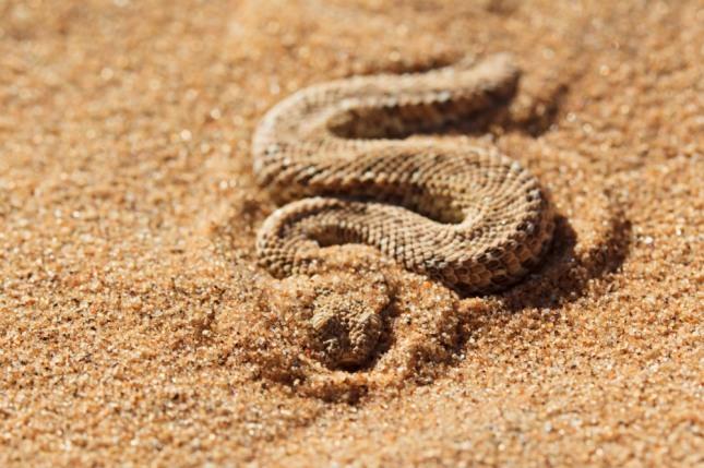 뿔이 달린 뱀을 손으로 잡는 꿈은 각종 시험과 고시에 합격하여 입신출세하게 된다. 입학, 승진, 당선, 승리 등의 길조이다. 자료=글로벌이코노믹