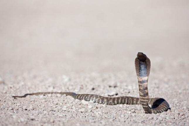 구렁이가 황금덩어리를 휘어 감고 있는 꿈은 부귀공명하고 돈벼락을 맞는다. 자료=글로벌이코노믹