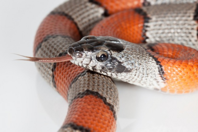연못 속의 무수한 뱀을 보는 꿈은 박물관이나 고분 속의 골동품 또는 금은보화를 볼 수 있게 된다. 자료=글로벌이코노믹