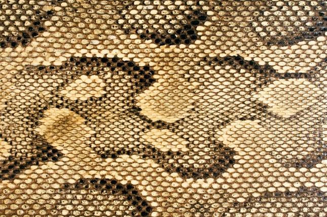 뱀에 관한 꿈은 권력가, 세도가, 배우자, 악하고 미운 사람, 교활한 사람, 정부, 독부, 강적의 동일시이며, 군사, 명예, 지혜, 정당, 작품, 일거리, 사업체나 기관을 상징한다. 자료=글로벌이코노믹