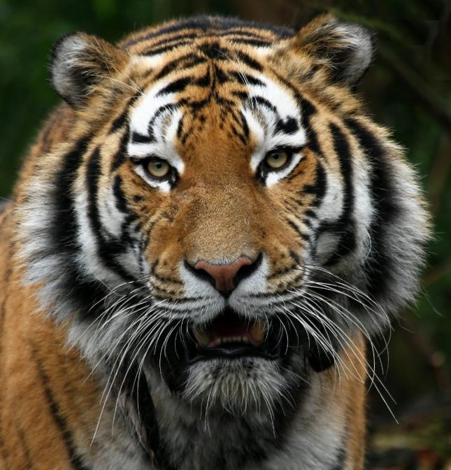 동물원으로 소풍을 가서 사자나 호랑이를 보는 꿈은 관청이나 공공기관에서 지도자와 관련하여 도움을 받게 되고 그로 인하여 성공하게 된다. 자료=글로벌이코노믹