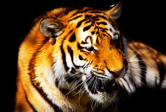 사자나 호랑이 등의 맹수와 싸워서 이기는 꿈은 하고 있는 일이 뜻대로 성사된다. 사진=글로벌이코노믹