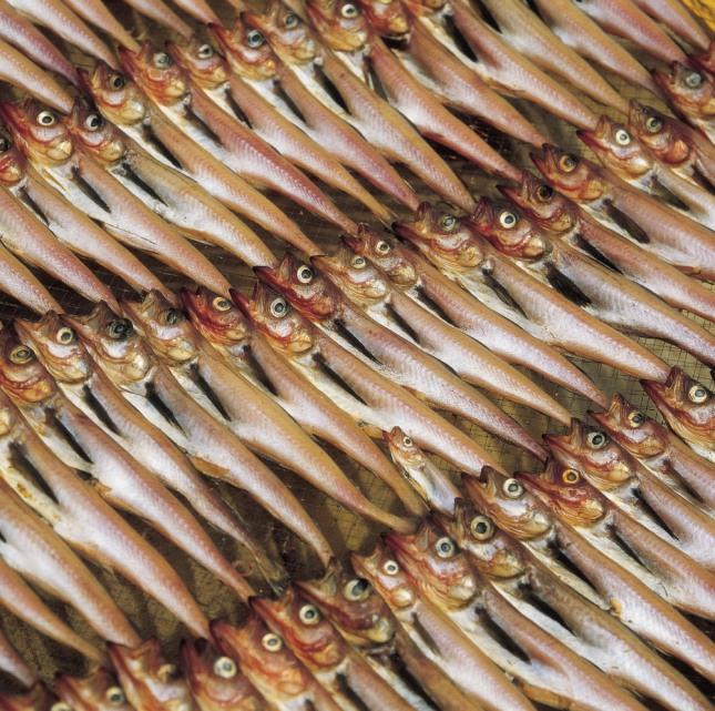 북어를 밥상위에 올려놓고 큰절을 하는 꿈은 지금까지 마음먹었던 것이 죄다 풀리게 된다. 자료=글로벌이코노믹
